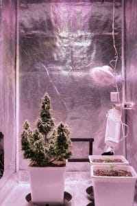 3-by-3-foot-grow-tent