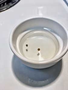 Seeds-in-water-in-dish